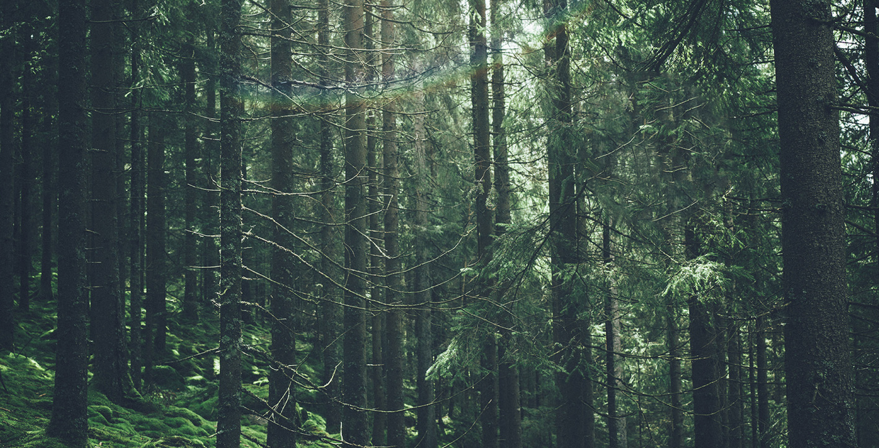 Bild_skogsbarometern