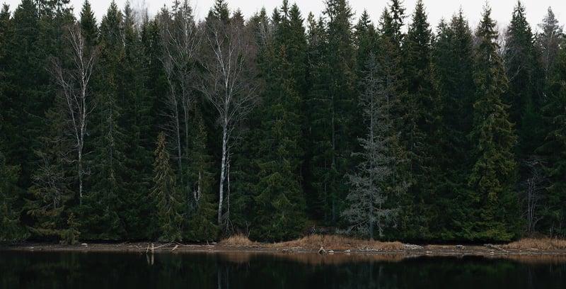 skogsvardslagen