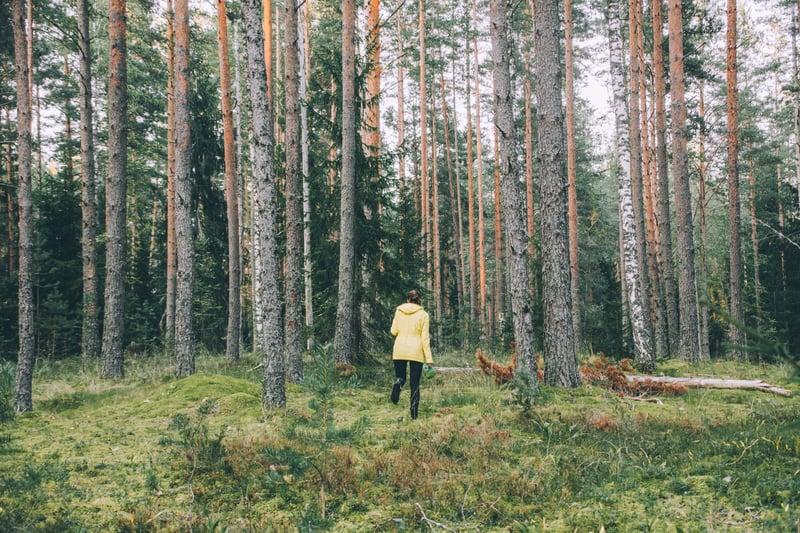 vill du sälja skog - här är våra bästa råd-1